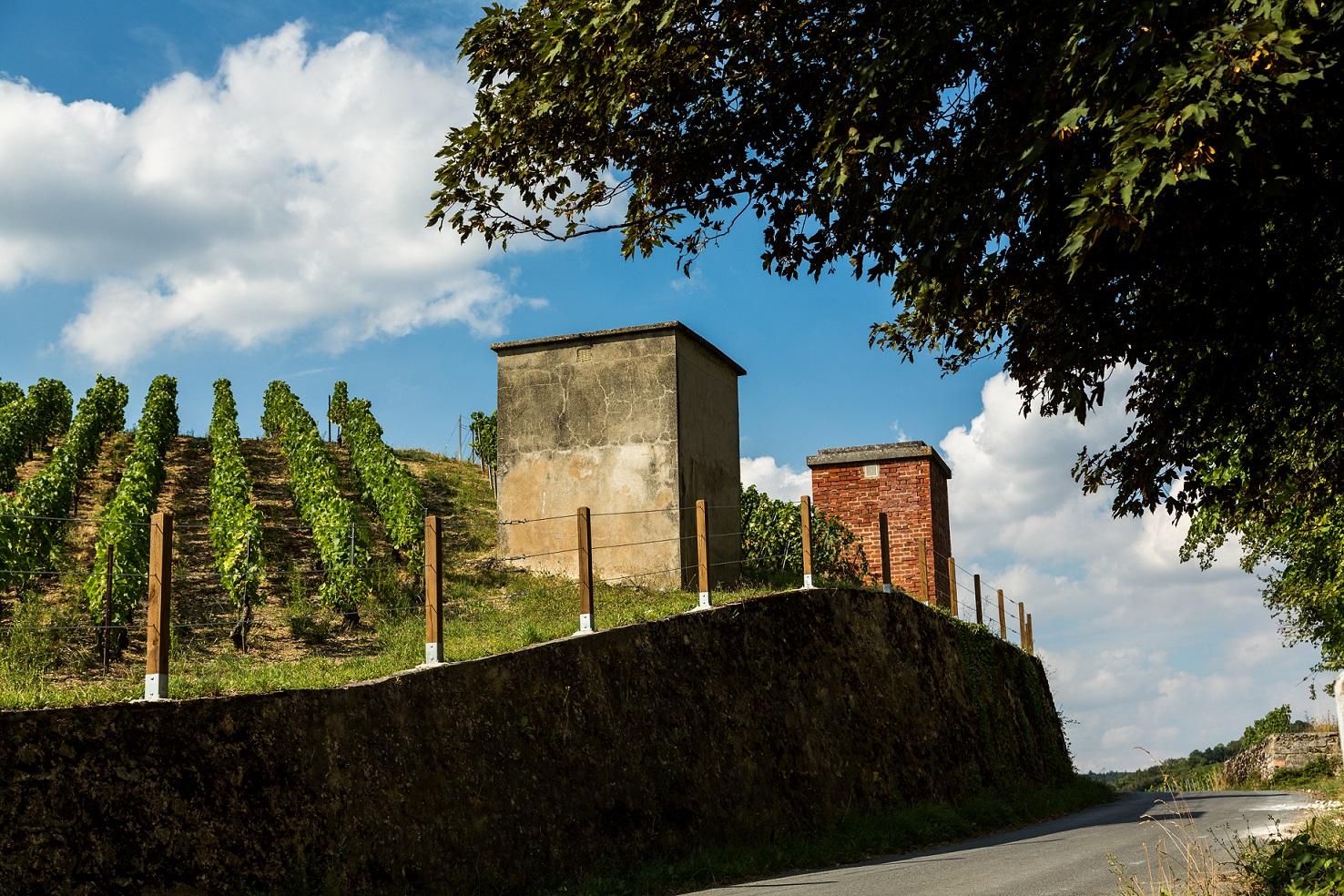Entretien des espaces verts, aménagement de parcs et jardins pour les coopératives vinicoles, maisons de champagne et viticulteurs